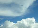 Clouds, w/bird.